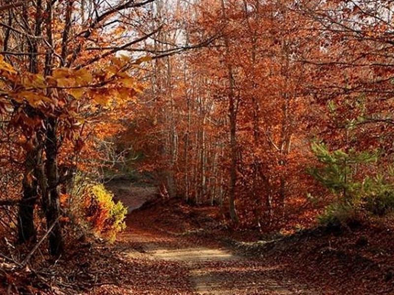 Nordic Walking nelle Foreste Casentinesi
