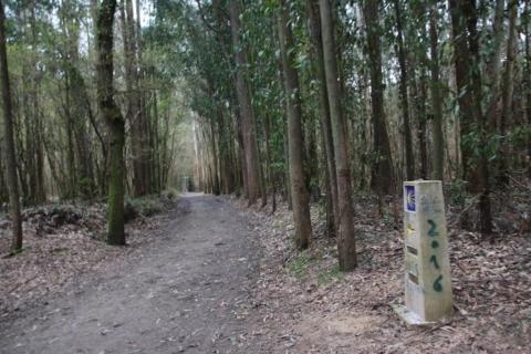 CamminoSantiago10